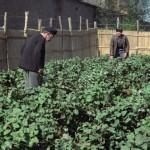 Les Patates - Blu-ray