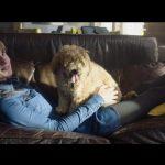 Get Out (2017) de Jordan Peele - Capture Blu-ray