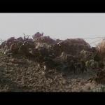 Les Dents de la mer (1975) de Steven Spielberg – Capture Blu-ray