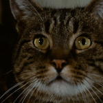 Le Chat - Capture Blu-ray